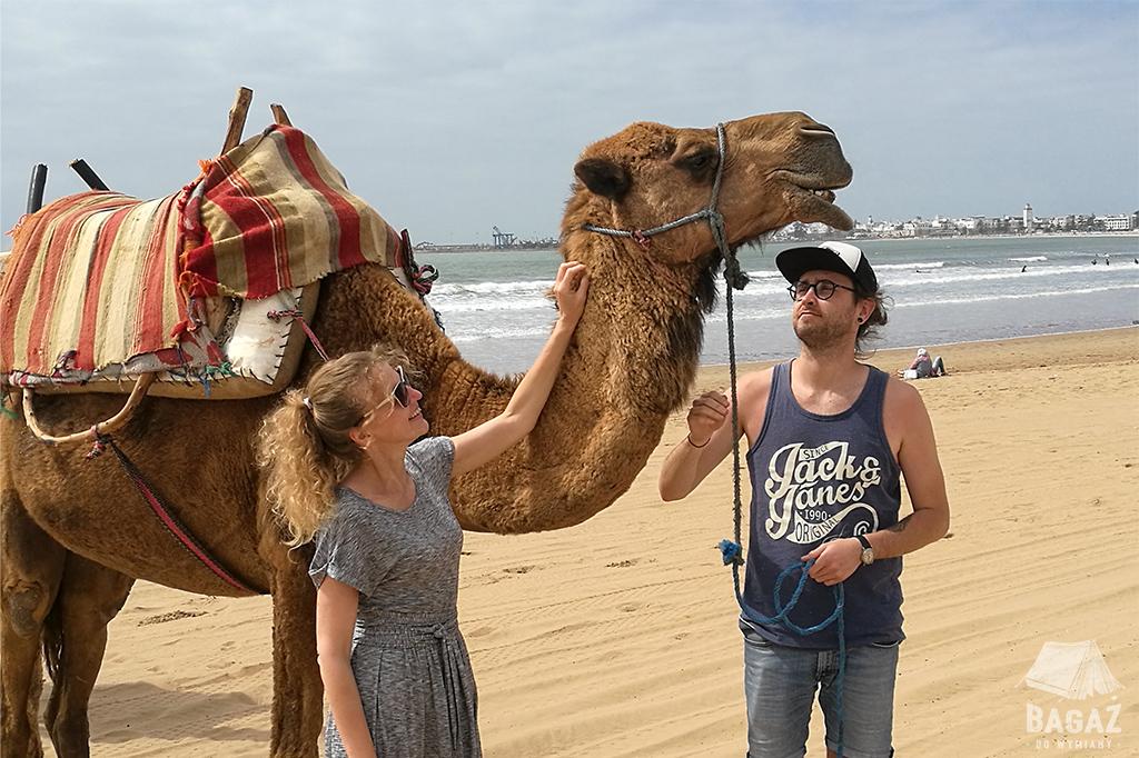wielbłąd plaża essaouira