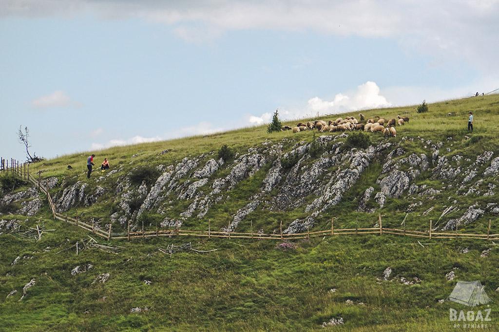 wzgórze-owce-przed-sarajewem
