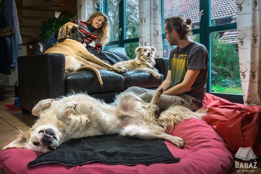 opieka nad 3 psami w ramach housesittingu
