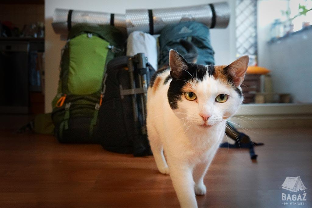 kot i dwa plecaki turystyczne
