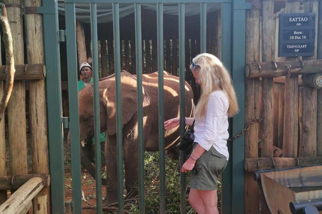 kenia adopcja słoni